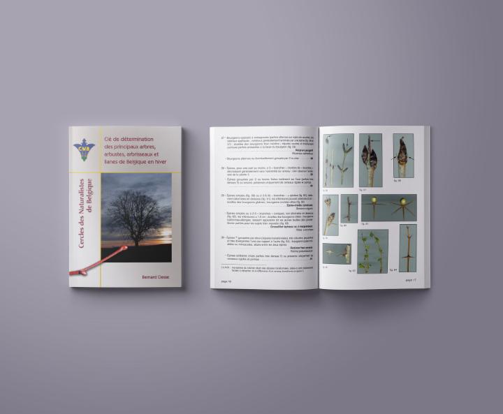 Clé de détermination des principaux arbres, arbustes, arbrisseaux et lianes de Belgique en hiver