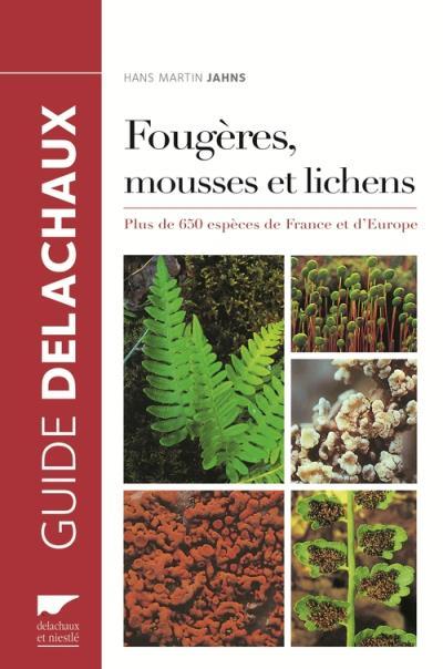 Fougères, mousses et lichens