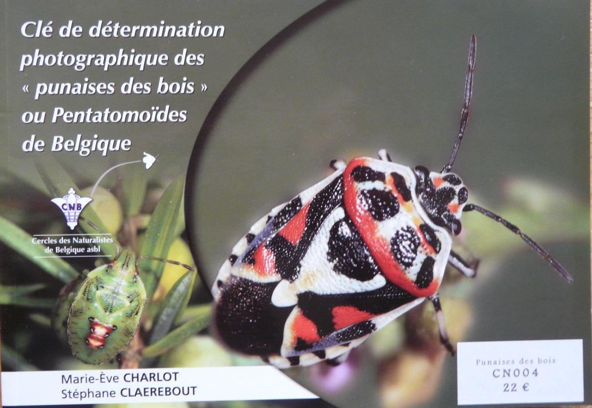 Clé de détermination photographique des punaises de Belgique