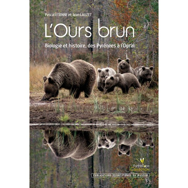 L\'ours brun