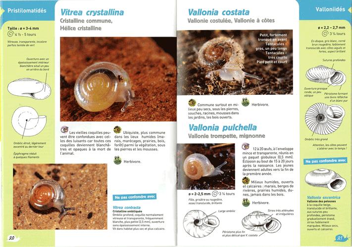 escargots3-z