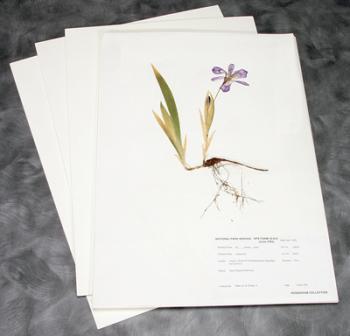 Planches pour herbier pliées