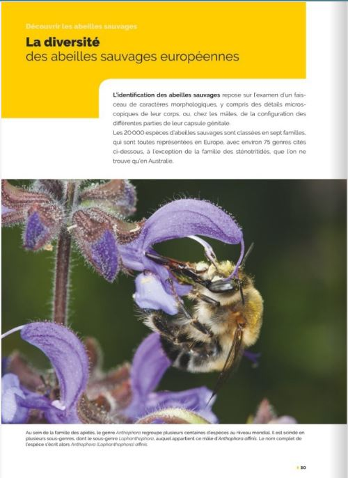 decouvrir-proteger-nos-abeilles-sauvages-page09