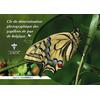 clef-determination-des-papillons-z