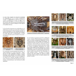 cle-determination-photographique-principales-araignees-Belgique-page01