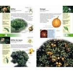 350-arbres-et-arbustes-page04