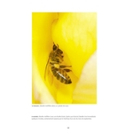 Abeilles-sauvages_page2