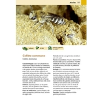 Hotels-a-insectes_page111
