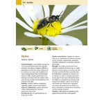 Hotels-a-insectes_page110