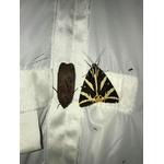 Maunakea-piege-insecte-dome-capture-1