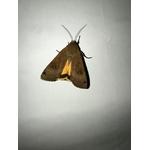Maunakea-piege-insecte-dome-capture-4