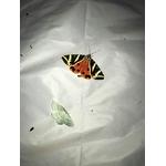 Maunakea-piege-insecte-dome-capture-5