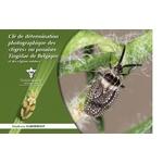 CNB-cle-determination-punaises-tingidae-couverture