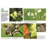 Les-insectes-en-bord-de-chemin (2)