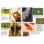 Les-insectes-en-bord-de-chemin (1)