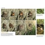 Les-insectes-en-bord-de-chemin (3)