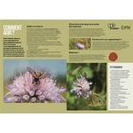 Les-insectes-en-bord-de-chemin (4)