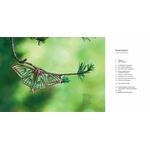 Il-faut-sauver-nos-insectes (2)