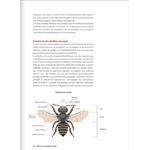 decouvrir-proteger-nos-abeilles-sauvages-page08