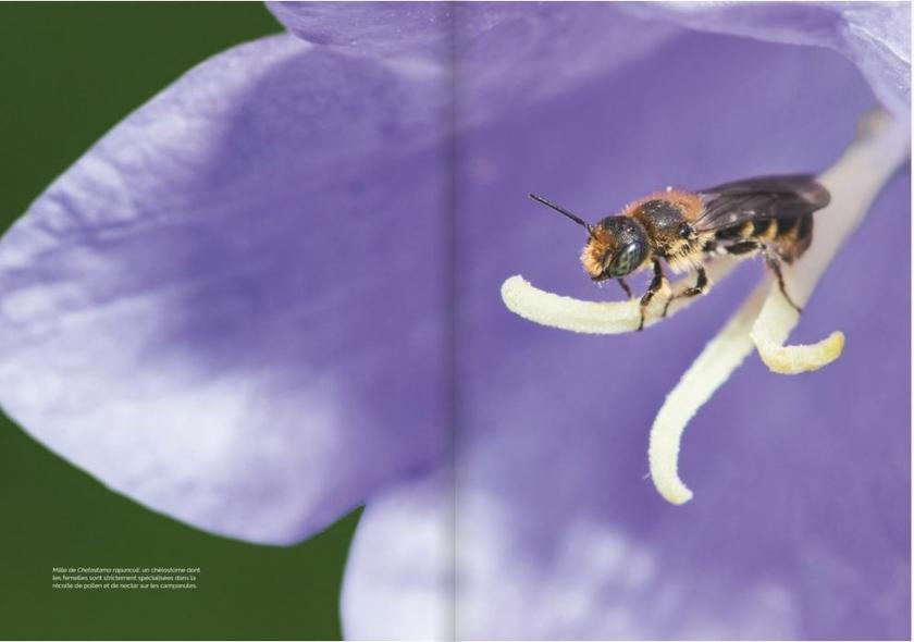 decouvrir-proteger-nos-abeilles-sauvages-page03-4
