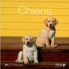 animaux-chiens-9782263065927