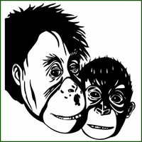 Stickers les 2 SINGES Chimpanzé
