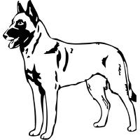 Stickers autocollant chien Malinois 01