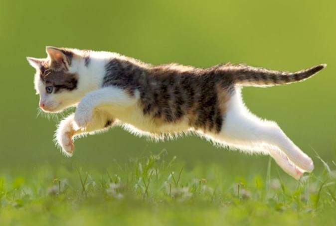 chat qui court
