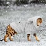 Chaud-habits-pour-chat-D-hiver-Pet-Chiot-Chaton-Manteau-Veste-Pour-Petit-Moyen-Chiens-Chats