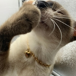 Collier-breloques-en-forme-de-c-ur-6mm-couleur-or-cha-ne-pour-chien-et-chat