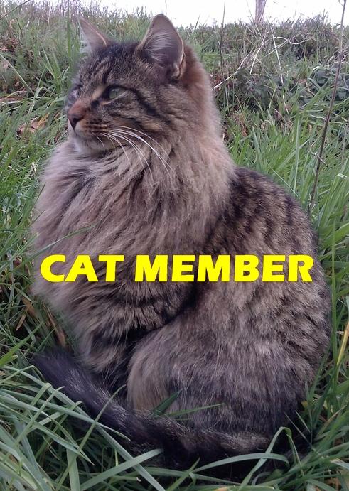 Cat member