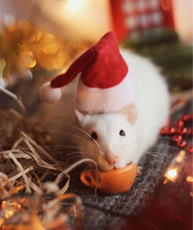 Décorartion Noël bonnet humoristique