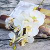 orchidee-artificielle-pour-decoration-blanche