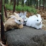 decoration-de-table-pour-paques-lapin-blanc