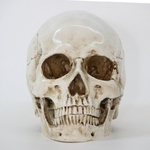 decoration-halloween-tete-de-mort-os
