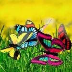 papillons-deco-sur-tige-jardin
