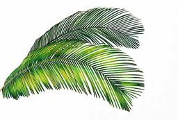 feuilles-de-palmier-decoration-table-anniversaire