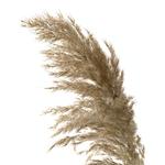 20-pi-ces-Naturel-Herbe-de-La-Pampa-Anches-Mariage-Bouquet-De-Fleurs-pour-D-cor