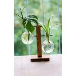 Plantes vertes-boutures-bois-boule de verre