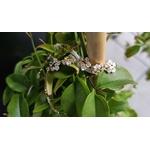 bracelet fleurs or (2)